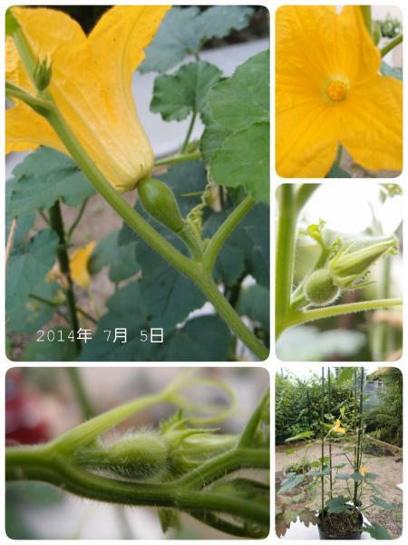 LINEcamera_share_2014-07-05-08-12-37_convert_20140705081724.jpg