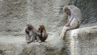 1494-zoo02.jpg