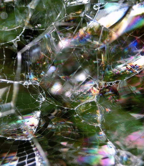 クモの巣にシャボン玉