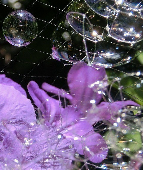 シャボン玉と紫の花