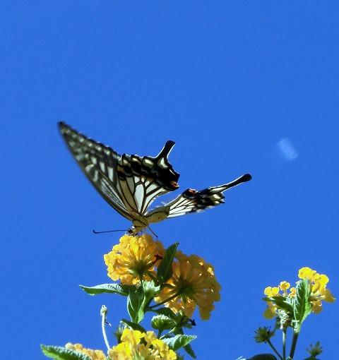 青い空と黄色い花とチョウ