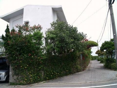 ブロック塀に誘引した植物