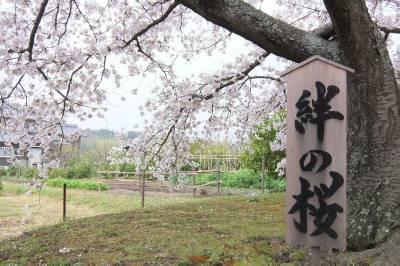 risaizu桜F0909