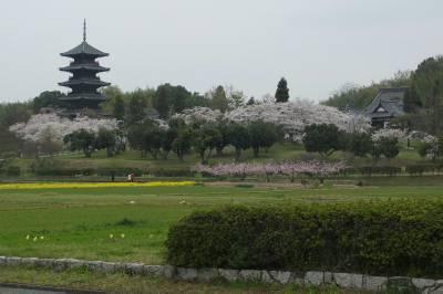 risaizu桜F0901