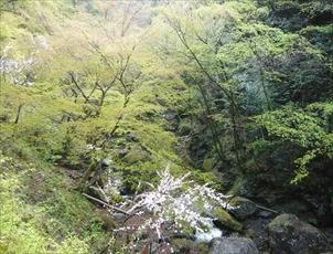 4月24日_北秋川_RC