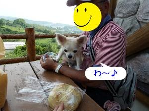 ブログ用P1030616-20140522-152326