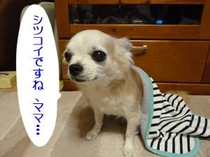 ブログ用P1030762-20140627-221710