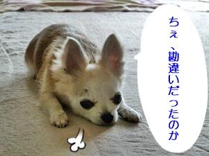 ブログ用P1030593-20140519-070440