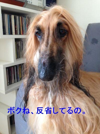 20140818_02.jpg