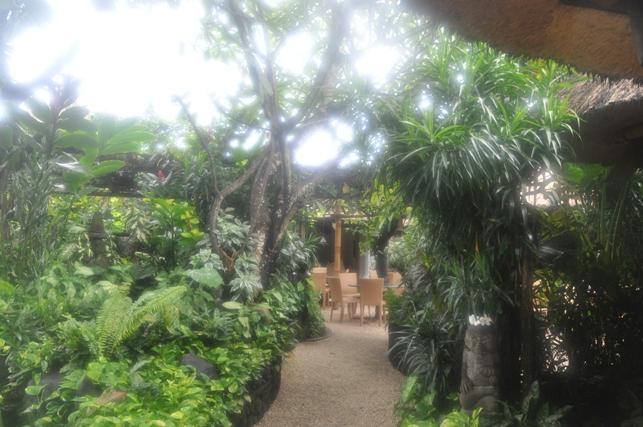 Bali6-08Feb14.jpg