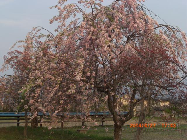 花梨26年春~ 132