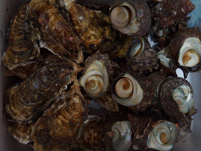 牡蠣とサザエ