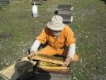 養蜂家清克