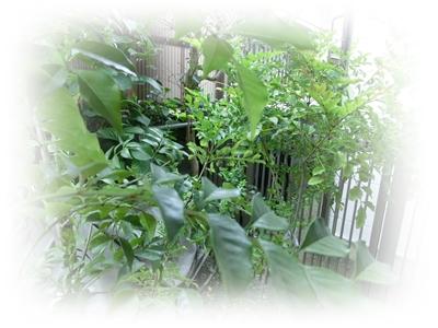 CIMG4632緑の植木鉢