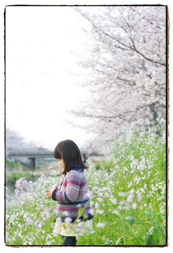 sakura327-1.jpg