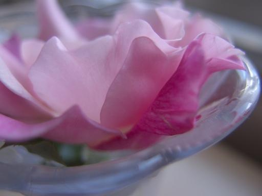 スパニッシュビューティの二番花