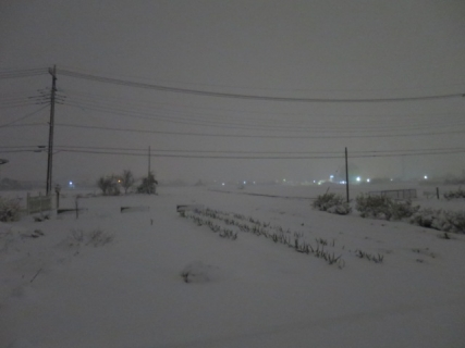 雪(20140214)