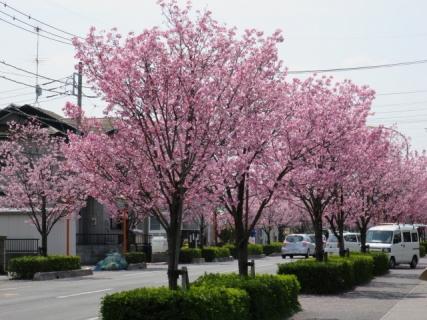 桜(20140402)