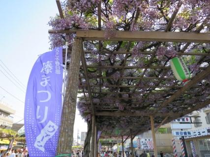 春日部藤まつり01(20140427)