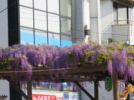 春日部藤まつり02(20140427)