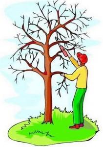tree-pruning.jpg