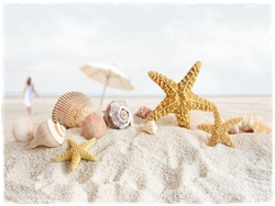 lovely-caribbean-seashells-for-pc[1]