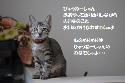 12_20140710152903b51.jpg