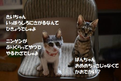 14_20140710152906849.jpg