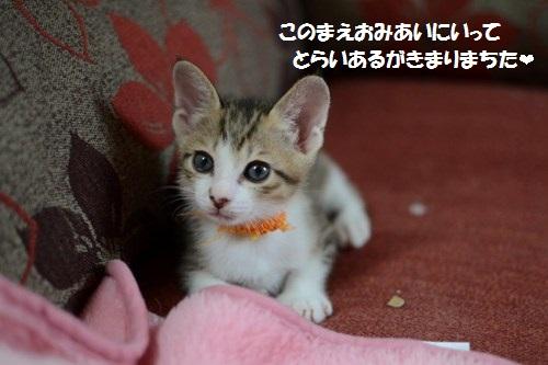 2_201406210036508cc.jpg