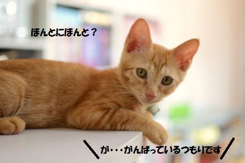 2_20140629202140da4.jpg