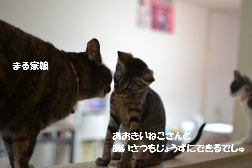 2_20140710152805708.jpg