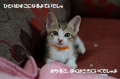 3_20140621003651b47.jpg