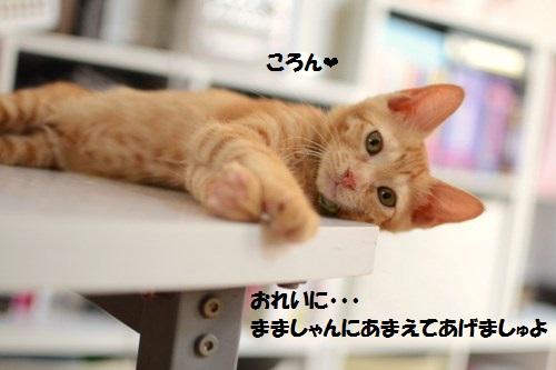 4_201406292021435f2.jpg