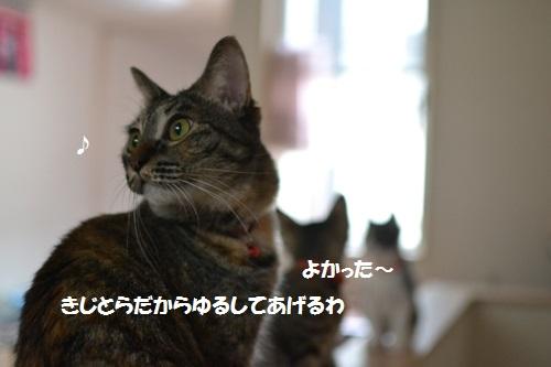4_20140710152808f54.jpg