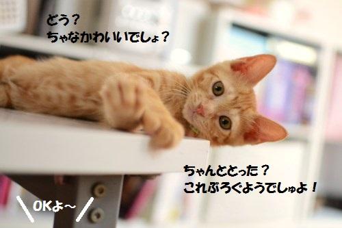 5_20140629202144703.jpg