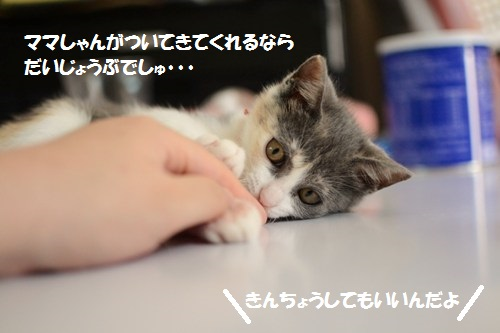 5_20140703204410476.jpg