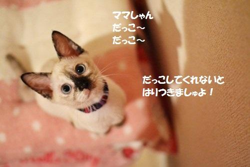 5_20140708174539cf6.jpg