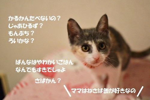 6_201407071811223ea.jpg