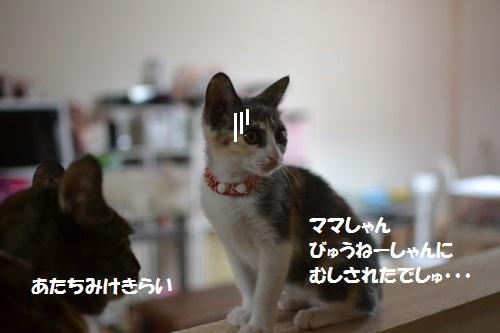 7_201407101528361ac.jpg
