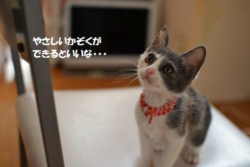 8_20140703204414add.jpg