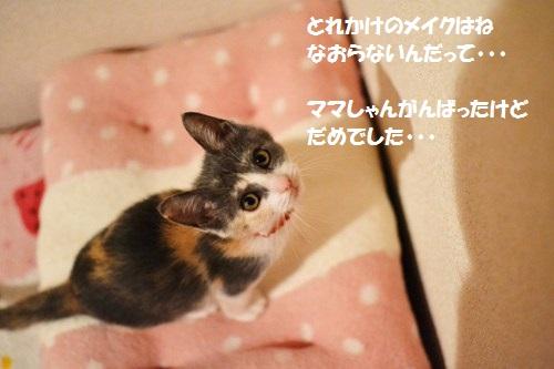 8_2014070718112598d.jpg
