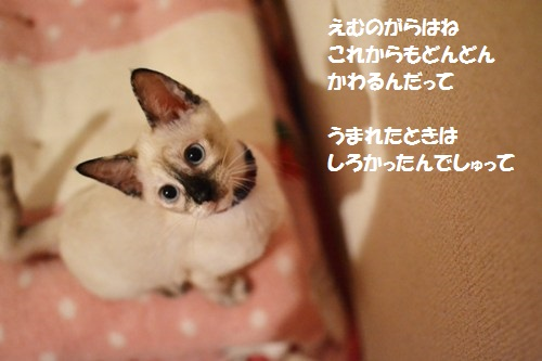 DSC_0647.jpg