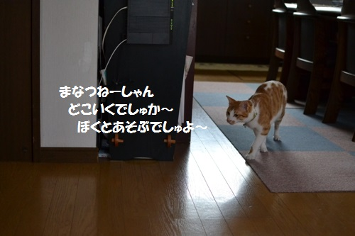 DSC_1265.jpg