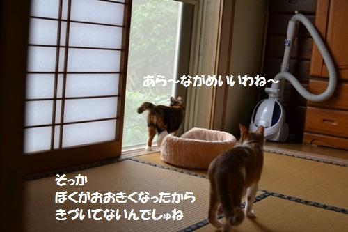 DSC_1268.jpg
