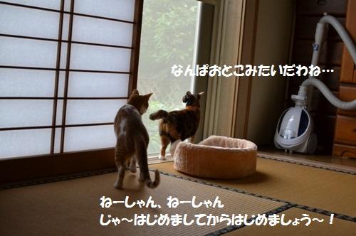 DSC_1269.jpg