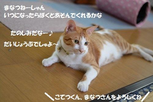 DSC_1273.jpg