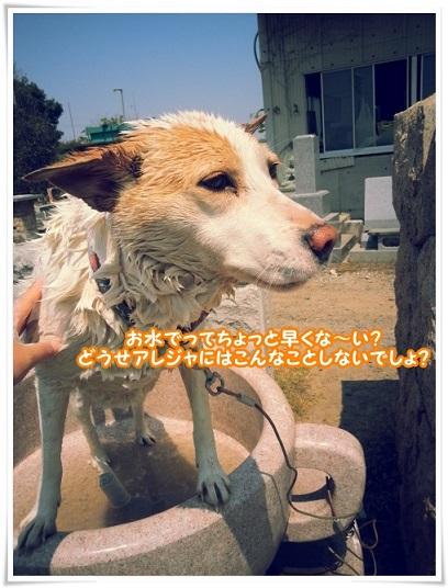 20140427_104917omizu.jpg