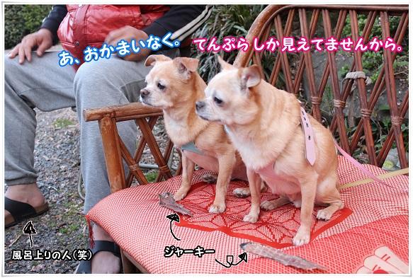 IMG_4769okamainaku~