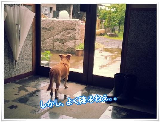 20140607_171017yokuhuru.jpg