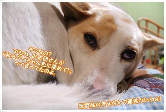 IMG_4561gooiro.jpg